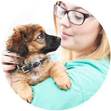 Vet holding puppy